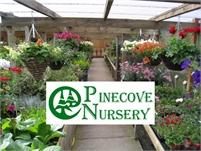 Pinecove Nursery