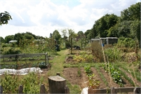 Bells Lane Allotments in Tenterden