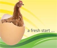Fresh Start for Hens   Tenterden Collection Point