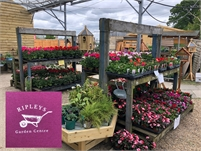 Ripleys Garden Centre