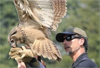 Rare Breeds Centre Bird of Prey Experiences