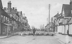 Tenterden Archive | Tenterden Cattle and Sheep Markets
