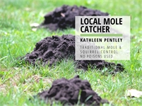 Mole and Squirrel Control | Kathleen Pentley