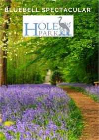 Bluebell Festival Hole Park Gardens