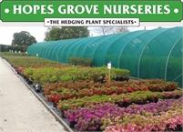 Hopes Grove Nurseries Lynne Hankinson